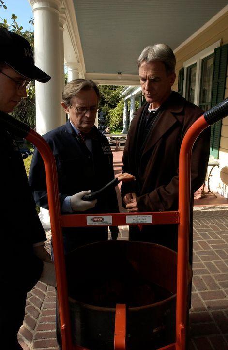 Ducky (David McCallum, M.) bekommt drei Fässer mit Leichenteilen in die Autopsie und stellt fest, dass es Leichen von Männern sind, die er gekannt h... - Bildquelle: CBS Television