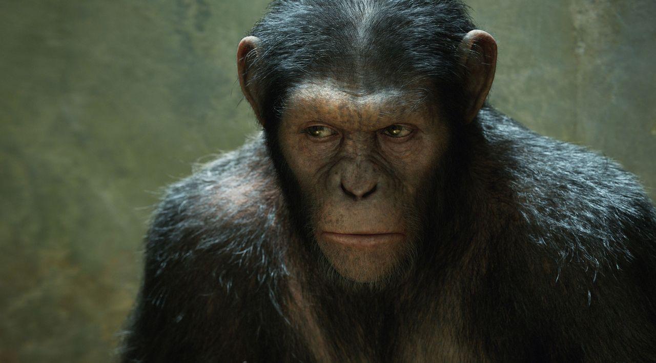 Caesar Zorn auf die Menschen kennt keine Grenzen mehr. Zuerst probt er erfolgreich den Aufstand in einem brutalen Tierheim, dann nimmt er mit einige... - Bildquelle: 2011 Twentieth Century Fox Film Corporation. All rights reserved.