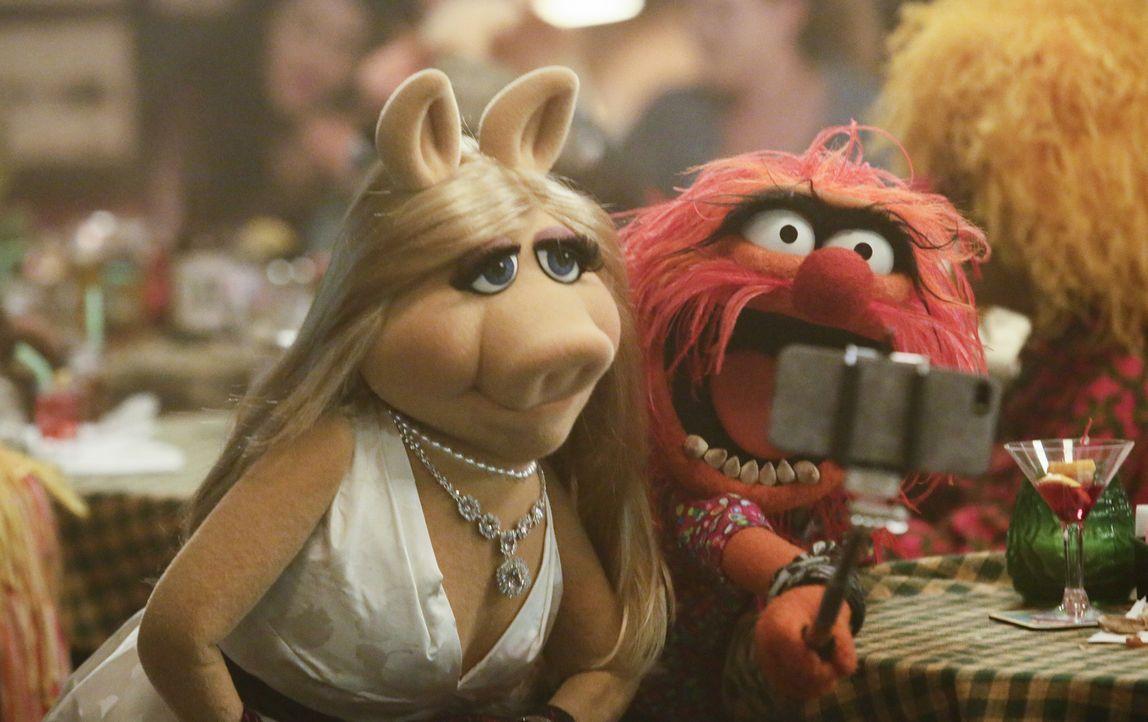 Haben einen spaßigen Abend: Miss Piggy (l.) und das Tier (r.) ... - Bildquelle: Nicole Wilder ABC Studios