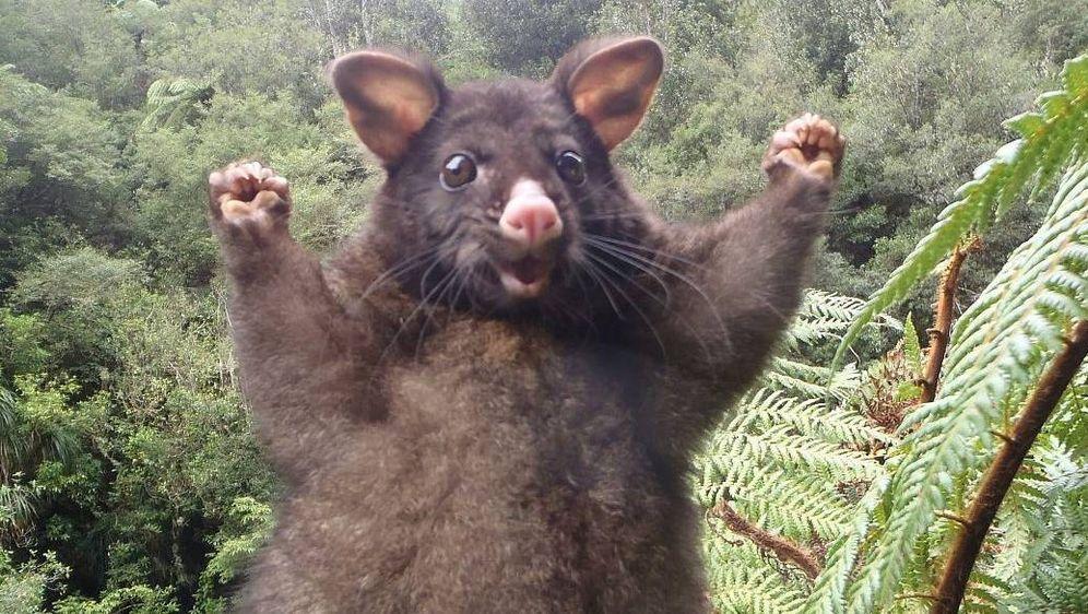 Ein jubelndes Possum erobert das Netz!