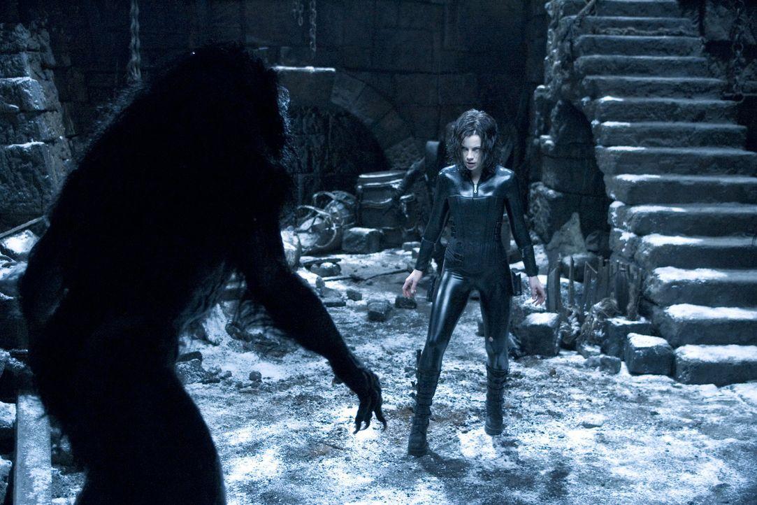 Noch ahnt die Vampirin Selene (Kate Beckinsale) nicht, dass ihr ganz mächtige, ewige blutrünstige Kollegen ans Leder wollen ... - Bildquelle: Sony Pictures Television International. All Rights Reserved.