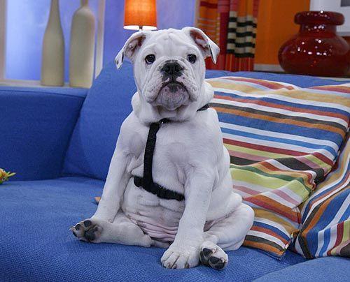 fruehstuecksfernsehen-studiohund-lotte-baby-003 - Bildquelle: Stefan Pulvermüller