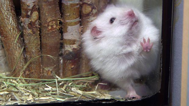 pbb-Hamster_01