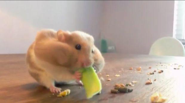 Sie sind die wahren Stars auf YouTube: Tiere, die mit ihren lustigen Eskapade...