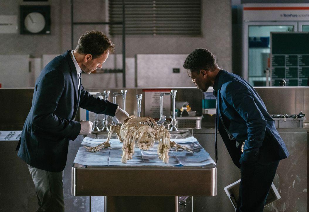 Bell (Jon Michael Hill, r.) und Holmes (Jonny Lee Miller, l.) können anhand des Skeletts des Mordopfers die Todesursache identifizieren ... - Bildquelle: Michael Parmelee 2015 CBS Broadcasting Inc. All Rights Reserved.