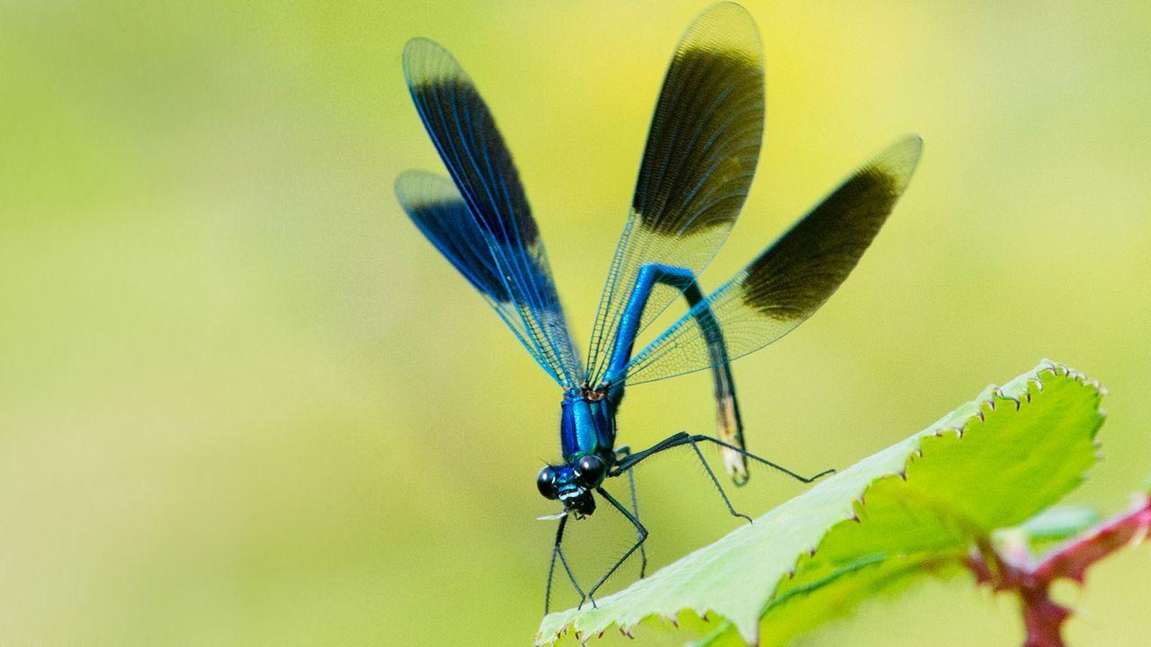 Libelle - Bildquelle: dpa