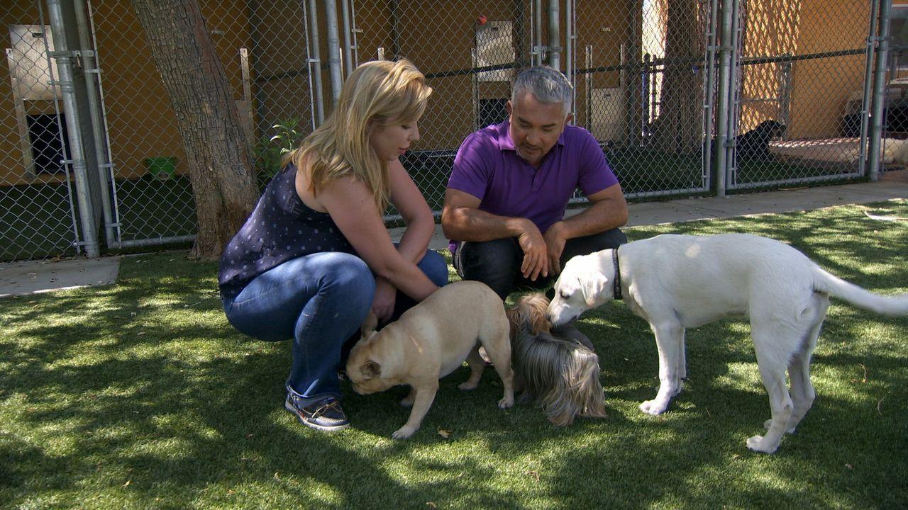 Die verzweifelt Katherine (l.) sucht Rat bei Cesar (r.), nachdem sie und ihre Hündin aus der Hundegruppe von Katherines Freundin geworfen wurden ... - Bildquelle: NGC/ ITV Studios Ltd