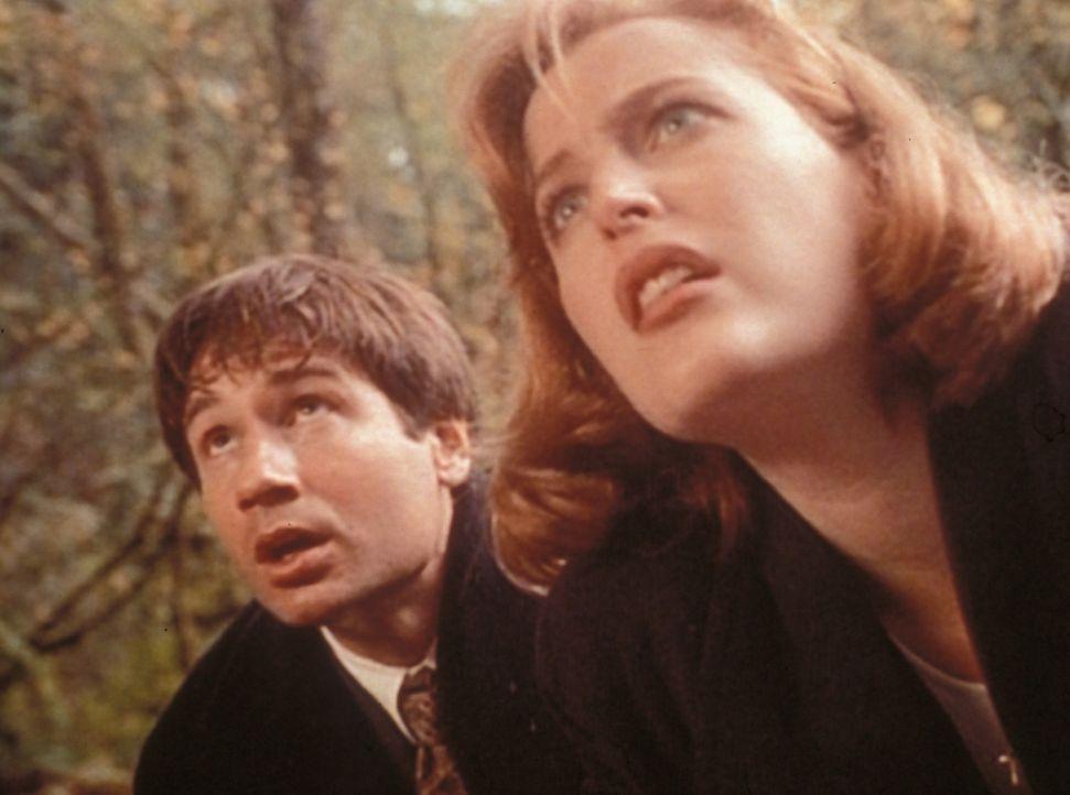 Mulder (David Duchovny, l.) und Scully (Gillian Anderson, r.) können gerade noch verhindern, dass der Entführer sein Opfer im Fluss ertränkt. - Bildquelle: TM +   Twentieth Century Fox Film Corporation. All Rights Reserved.