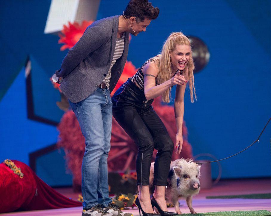 Ich glaub mein Schwein pfeift! Moderator Wayne Carpendale und Jurymitglied Michelle Hunziker amüsieren sich köstlich über das Talent des Schweins -... - Bildquelle: Jens Hartmann SAT.1