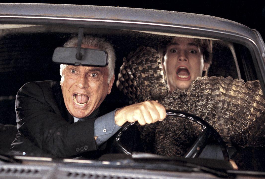 Als die Eule O.J. nach ausgiebigem Koks-Genuß erste Flugversuche wagt, landet sie ausgerechnet im Auto von Toms (Ashton Kutcher, r.) unausstehliche... - Bildquelle: Falcom Media