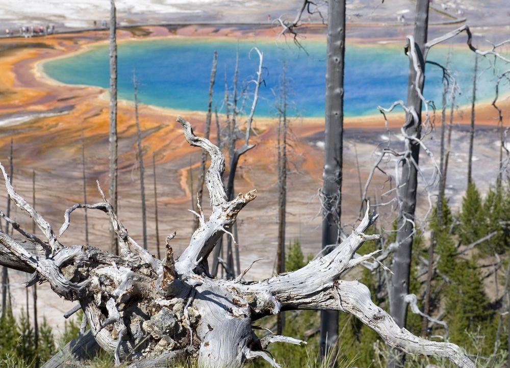 Auf einen kurzen Sommer folgt im Yellowstone Nationalpark erneut eine Zeit des Wandels. Mit dem Herbst beginnt ein besonderes Schauspiel, wenn die m... - Bildquelle: Paul D. Stewart 2008 BBC