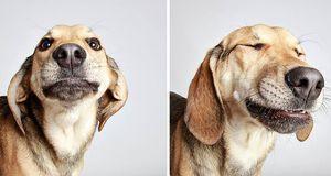 adopted-dog-teton-pitbull-humane-society-utah-15