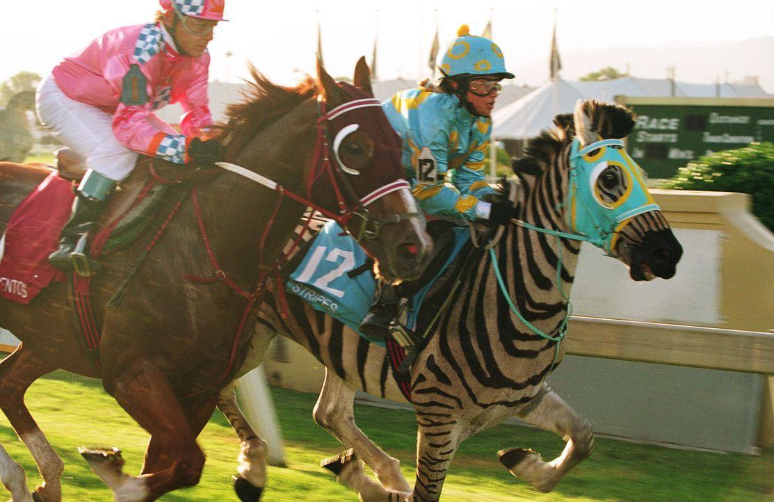 Channing (Hayden Panettiere, r. oben)  und Stripes (r. unten) geben alles um das Kentucky Open zu gewinnen ... - Bildquelle: Constantin Film