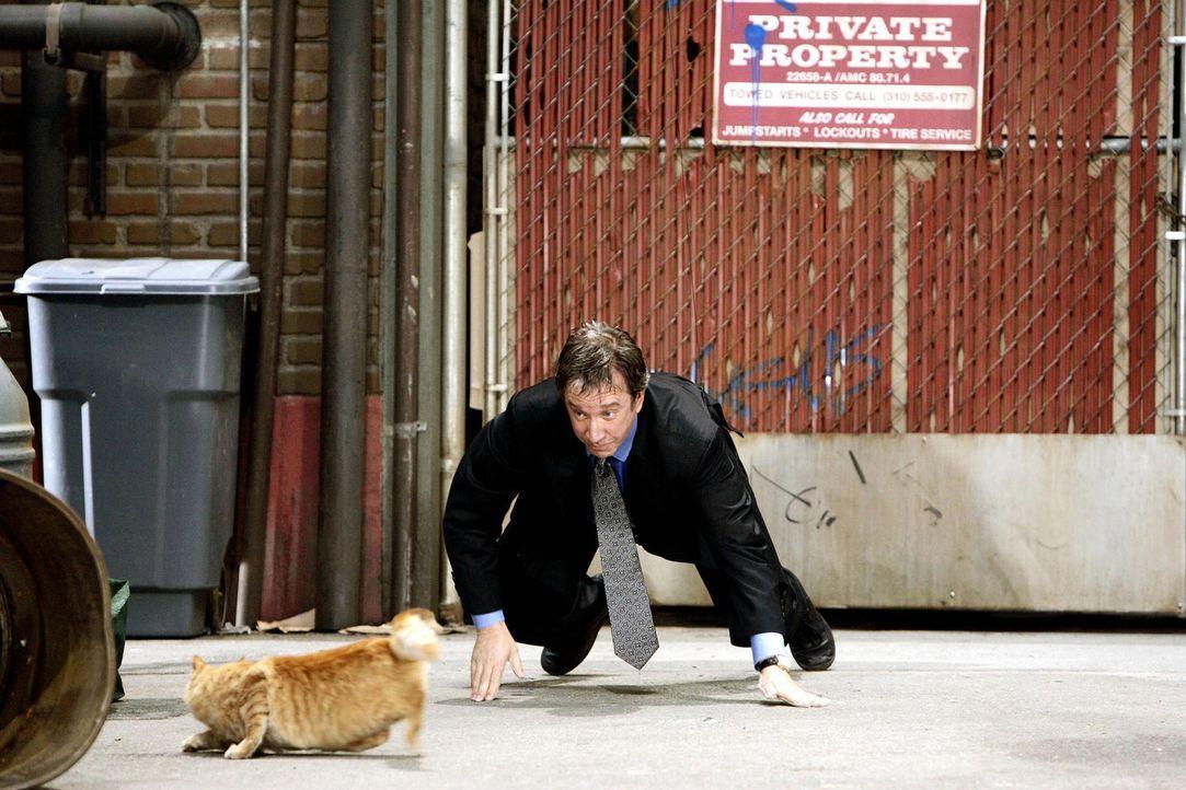 Auf Katzenjagd: Eben noch ein Hund und jetzt wieder der Staranwalt Dave Douglas (Tim Allen) ... - Bildquelle: Disney Enterprises, Inc. All rights reserved
