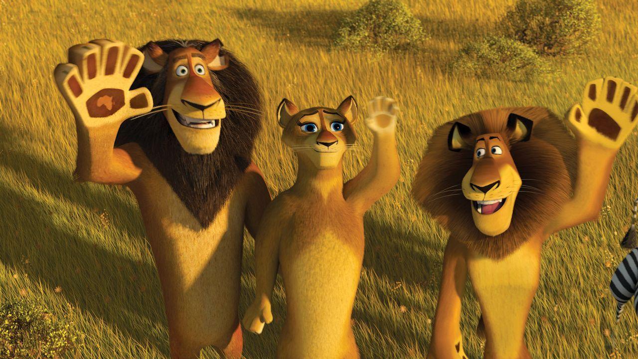 Der Plan war, Madagascar den Rücken zu kehren und zurück ins heimatliche Amerika zurückzukehren. Doch nach einer Bruchlandung in Afrika trifft Al... - Bildquelle: (2008) DREAMWORKS ANIMATION LLC. ALL RIGHTS RESERVED.