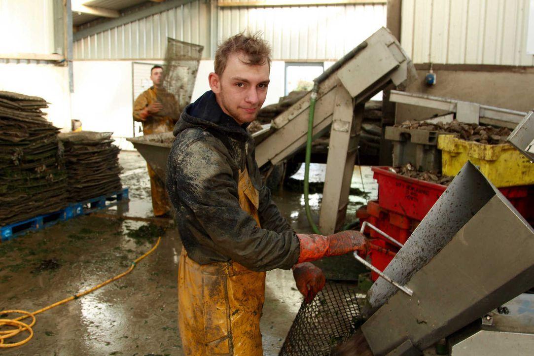 So hart musste Mirco noch nie arbeiten, trotzdem ist er dankbar, eine Chance auf der Austernfarm in Irland zu bekommen - so kann er endlich sein eig... - Bildquelle: kabel eins