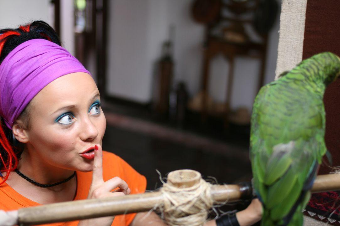 Mitten im südamerikanischen Dschungel stoßen Taffie (Monique van der Werff) und die anderen Ranger auf eine gierige Organisation, die große Teile de...
