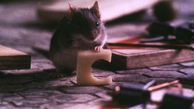 Mit findigem Einfallsreichtum verteidigt eine kleine Maus ihr lebenslanges Wo...