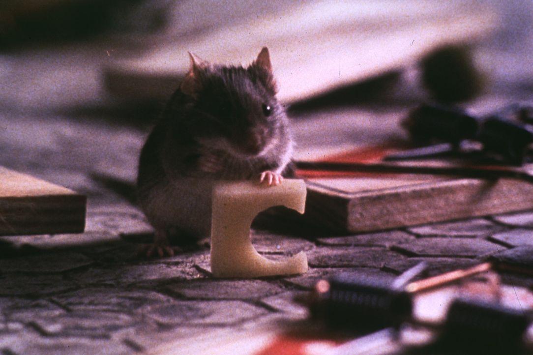 Mit findigem Einfallsreichtum verteidigt eine kleine Maus ihr lebenslanges Wohnrecht in einem alten Anwesen ... - Bildquelle: TM+  1997 DreamWorks LLC. All Rights Reserved.