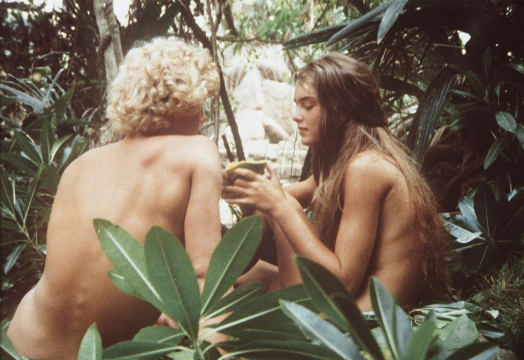 In ihrer Laubhütte fühlen sich Richard (Christopher Atkins, l.) und Emmeline (Brooke Shields, r.) geborgen ... - Bildquelle: Columbia Pictures