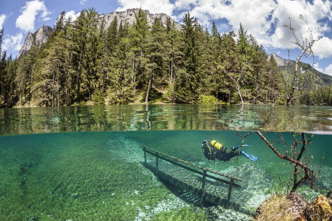Wunderbare Unter- und Oberwasserwelt im See von Tragöß in der Steiermark/Österreich: Die größte Höhe erreicht der Wasserspiegel im Frühsommer, dann... - Bildquelle: Marc Henauer Marc Henauer  Level A
