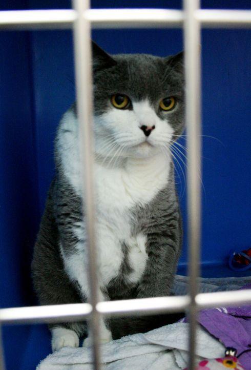 Dr. Brown traut seinen Augen kaum, als er eine zwölfjährige Katze vor seiner Praxis findet, die ihre Besitzer offensichtlich auf schnellstem Wege en... - Bildquelle: WTFN Entertainment