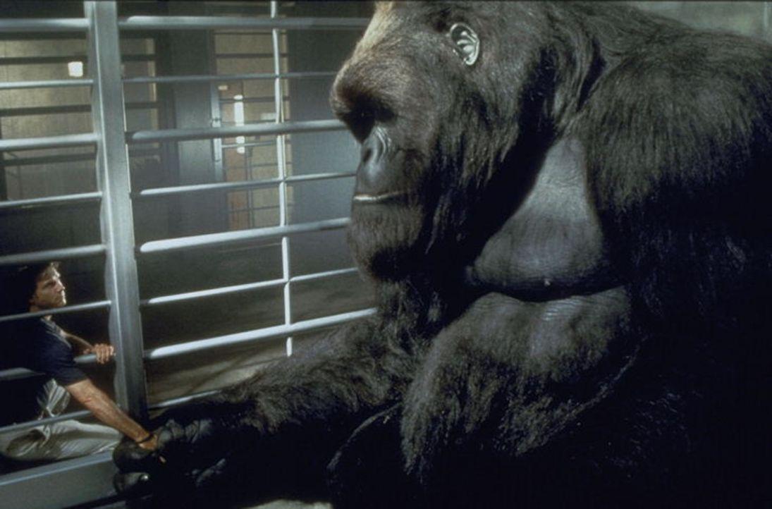 Um den harmlosen Gorilla Joe vor Wilderen zu schützen, lässt sich Jill von dem Zoologen Gregg O'Hara (Bill Paxton)dazu überreden, Joe in einen Na...