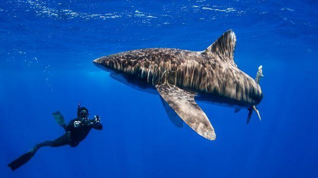 Auge in Auge mit einem Weißspitzen-Katzenhai: Steve Backshall ... © Deron Ver...