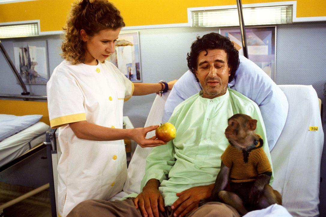 Der Straßenmusikant Beppo (Rolf Zacher, r.) sorgt mit seinem kleinen Kapuzineräffchen Jäcki für Trubel in der Klinik. Schwester Fränzi (Jacquel... - Bildquelle: Noreen Flynn Sat.1