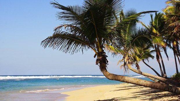 Palmen-Strand