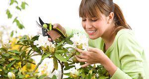 Gartengestaltung_2016_02_29_Rhododendron schneiden_Bild 1_fotolia_CandyBox Im...