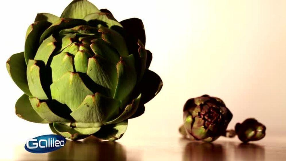 Galileo Themengebiet Gemüse
