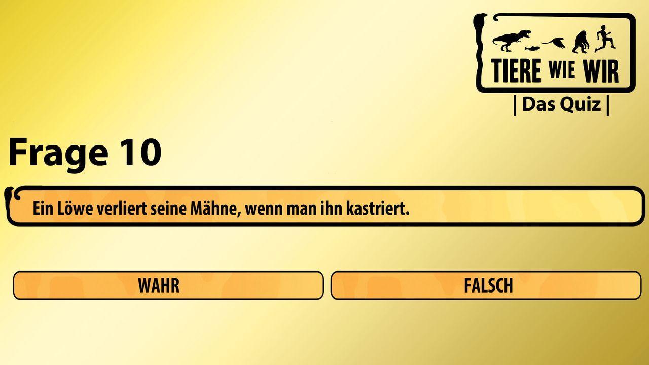 10_Frage_WF_Löwe