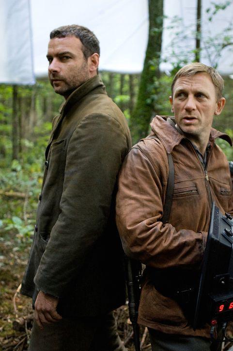Schon bald kommt es zwischen den beiden Brüdern Tuvia (Daniel Craig, r.) und Zus (Liev Schreiber, l.) zum offenen Streit um die richtige Strategie.... - Bildquelle: 2009 Constantin Film Verleih