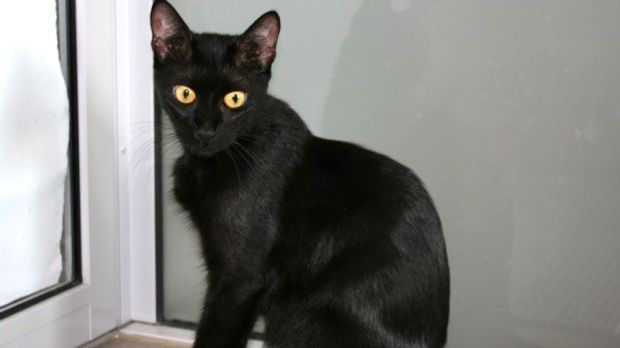 Nera ist eine sehr verschmuste, aktive Katze.