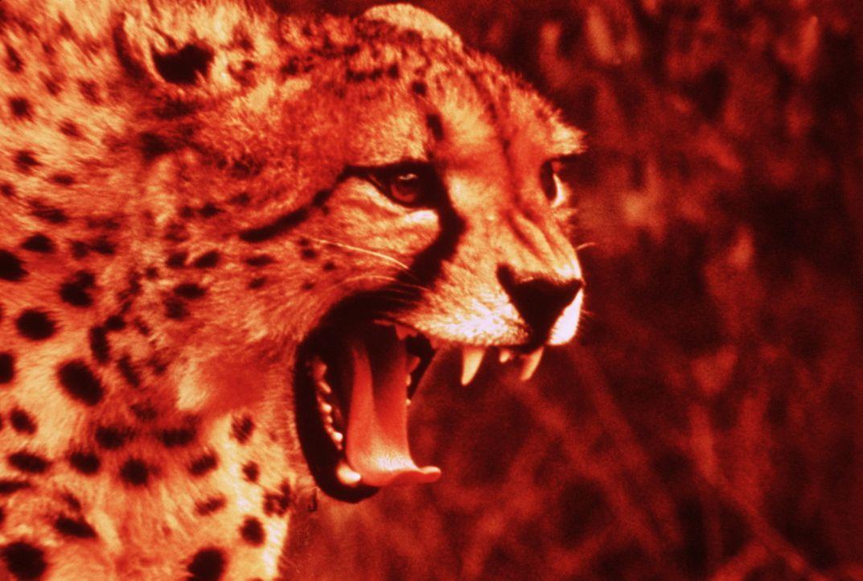 Die Tier- und Pflanzenwelt Afrikas ist von ungeheurer Vielfalt, exotisch, abenteuerlich und staunenswert zugleich ... - Bildquelle: Warner Bros. Pictures