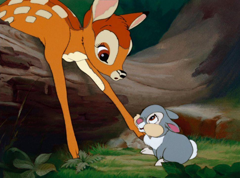 Bambi (l.) und sein Freund Klopfer (r.) erleben viele aufregende Abenteuer im Wald ... - Bildquelle: Disney