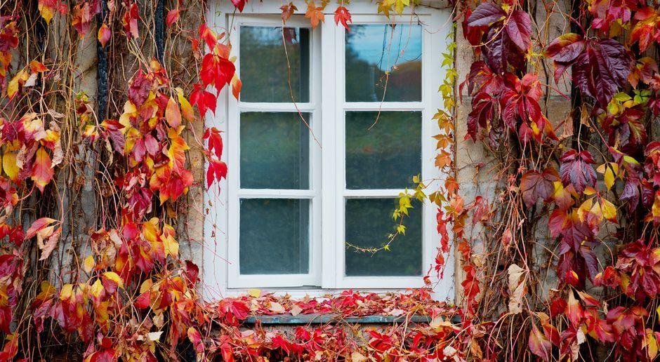 Fenster abdichten: Das Wundermittel Acryl - SAT.1 Ratgeber