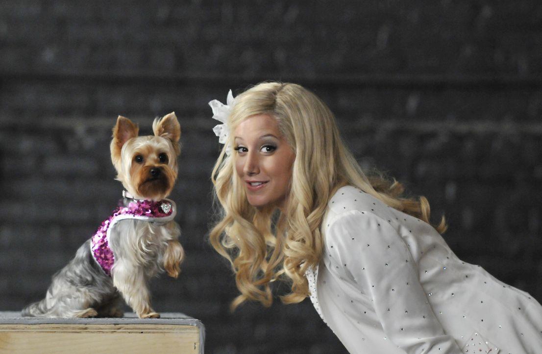 """Erst in New York wird Sharpay (Ashley Tisdale) klar, dass der Regisseur nicht sie, sondern ihren Hund verpflichten möchte. Dumm nur, dass """"Boy"""" ein... - Bildquelle: 2010 Disney Enterprises, Inc. All rights reserved."""