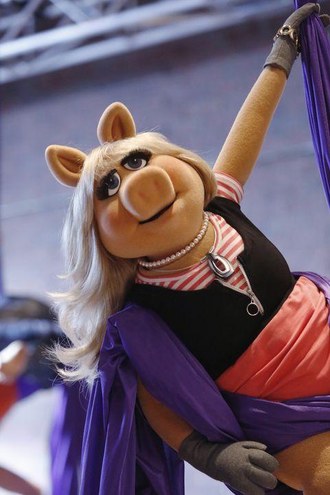 Besucht einen Kurs in Luftakrobatik: Miss Piggy ... - Bildquelle: Nicole Wilder ABC Studios