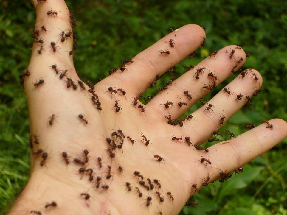 ants-4239_1920