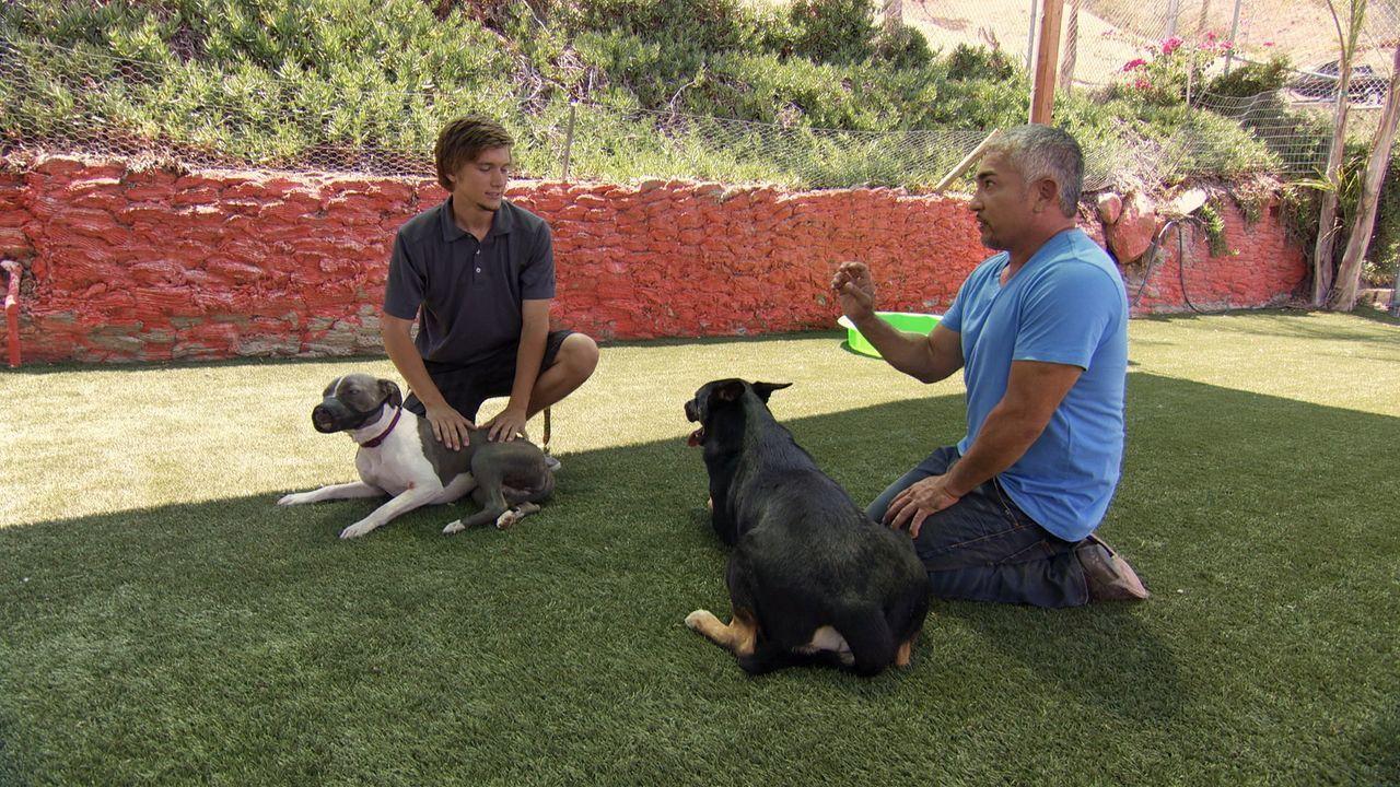 Die Beziehung von Sydney und Tyler (l.) wird durch die ständigen Auseinandersetzungen ihrer Hunde Nani und Blitz auf eine harte Probe gestellt. Kann... - Bildquelle: NGC/ ITV Studios Ltd