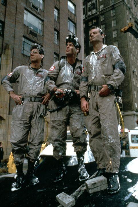 Peter Venkmans (Bill Murray, r.), Raymond Stantz' (Dan Aykroyd, M.) und Egon Spenglers (Harold Ramis, l.) erster Auftrag führt sie in ein New Yorke... - Bildquelle: Columbia Pictures