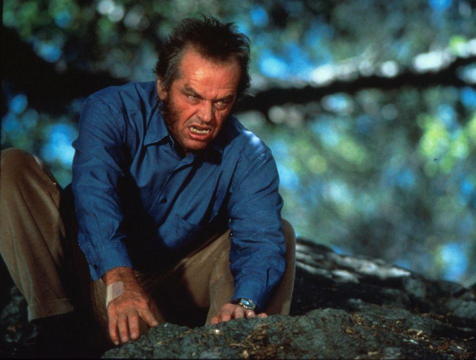 Bei Vollmond ist Will (Jack Nicholson) nicht mehr zu halten ... - Bildquelle: Columbia TriStar