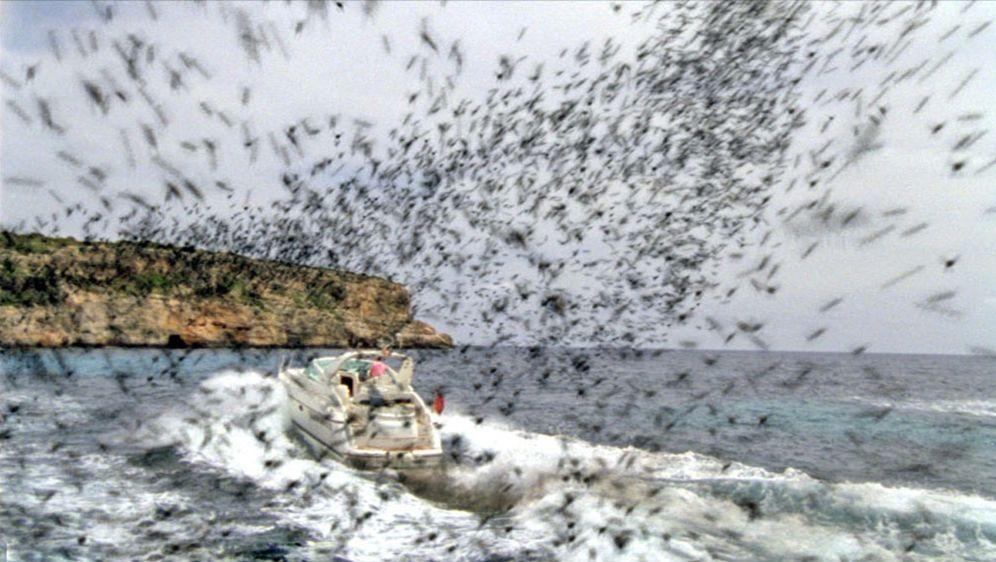 Die Bienen - Tödliche Bedrohung - Bildquelle: Wasabi Film/TRIXTER Sat.1