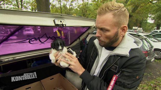 Achtung Kontrolle - Achtung Kontrolle! - Hundewelpen In Todesgefahr: Auf Den Spuren Von Hundewelpenhändler