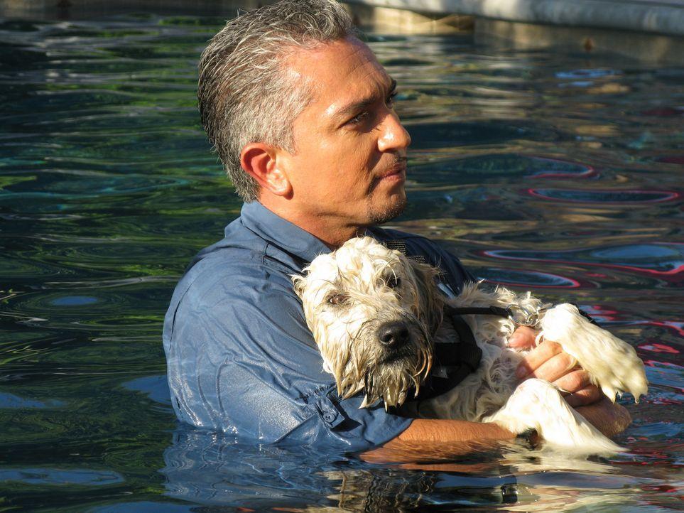 Cesar kümmert sich um den Terrierwelpe Charlotte ... - Bildquelle: Rive Gauche Intern. Television