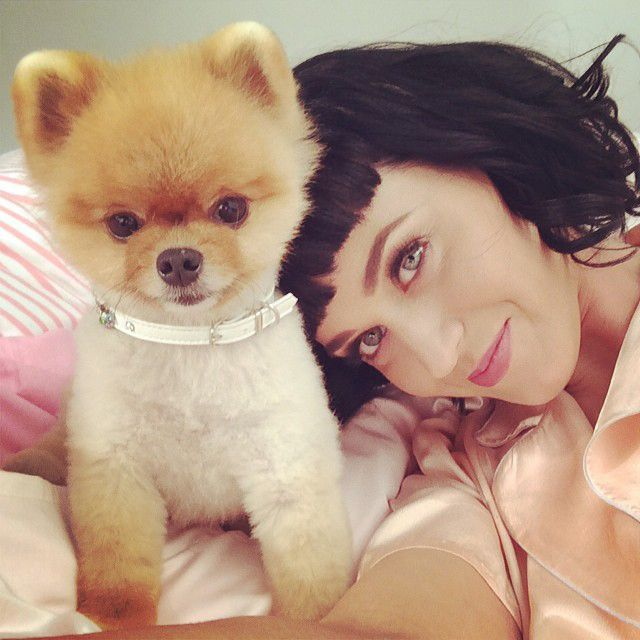 Katy-Perry-Hund-14-02-14-Instagram-Katy-Perry - Bildquelle: Instagram/Katy Perry