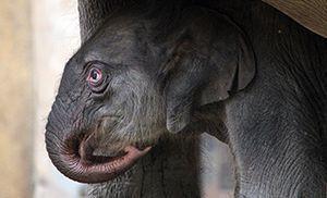 150714_Baby-Elefant_fliesstext_goetz-berlik3