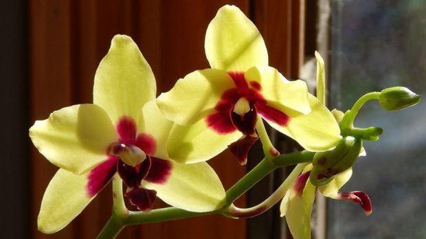 Echte Orchideen machen sich auch als Brautschmuck prächtig.